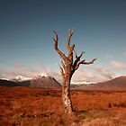 Dead tree by Maria Gaellman