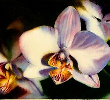 Edge of Summer - White Orchid Painting in Watercolor by Arena Shawn