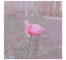 Vintage Poppy Photographic Print