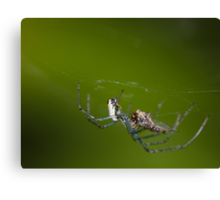 Spider vs Fly! Canvas Print