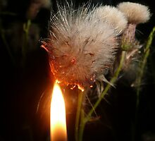 Burning thistle down - night time photograph by indiacording