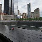 Rose at 911 Memorial Pool by Gary Eason