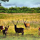 Where The Deer and The Antelope Play... by naturelover