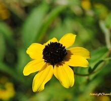 Droopy Daisy by NancyC
