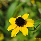 Droopy Daisy by PixByNancy