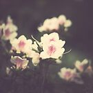 Vintage Pink Flowers by Andreka