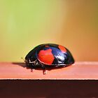 Pot Edge Ladybug by Greg Little