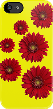 Claret Gerberas by Paula J James