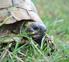 turtle in the grass by MidnightAngel