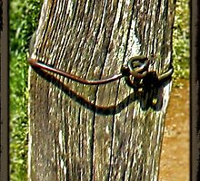 Old Fence Post and Rusted Wire by © Bob Hall
