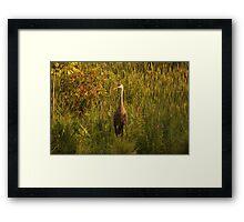 Sandhill Crane Standing on Shoreline Framed Print