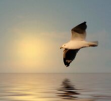 Seagull in Flight - #1 by kenspics