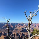 Grand Canyon by Pippa Carvell