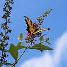 Yellow Swallowtail Butterfly by Trudy Wilkerson