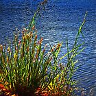 Lake Edge by kendlesixx