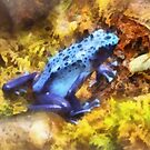 Blue Dart Frog by Susan Savad