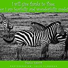Zebras in Green by FathersWorld