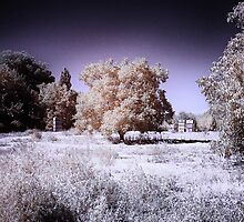 Infrared landscape by Wendy  Rauw