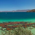 Bahia Concepcion, Mexico Panorama by fearonwoodphoto