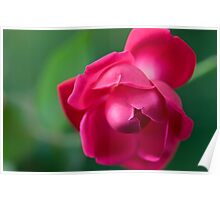 bright pink flower Poster