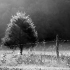 Morning Fog O'er Cow Pasture by Jean Gregory  Evans