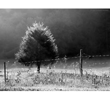 Morning Fog O'er Cow Pasture Photographic Print