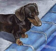 Dachshund at poolside by Michael Werner