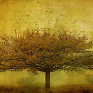 Quercus Robur by Margi
