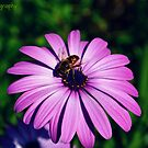 Busy Bee by Zoe Harris
