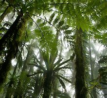 Foggy Tree Fern Forest - Pohnpei, Micronesia by Alex Zuccarelli