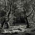 The Sacred Grove by EvilTwin
