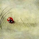 Lady Bird by Svetlana Sewell