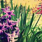 Spring Hyacinth by Sharon Woerner