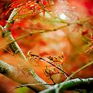 autumn ... by karenanderson