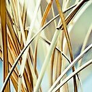 Reeds by Morgan Barbour