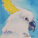 Cockatoo too by christine purtle