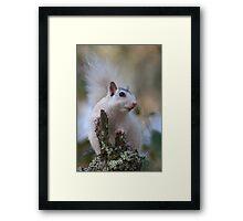 Astronaut Squirrel Framed Print