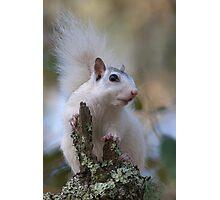Astronaut Squirrel Photographic Print