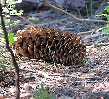 Sugar Pine Cone by Chris Gudger