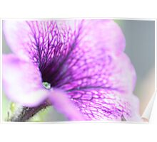 Natures Flower Poster