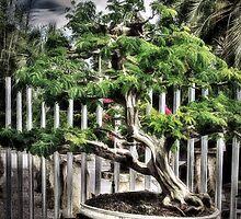 Bonsai by Noble Upchurch