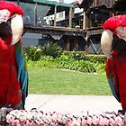 Parrots Birds Red Park Tropical by HQPhotos