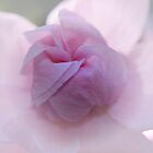 softly, softly unfolding by gmws