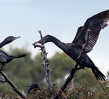 Two Cormorants by Nikki25