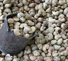 Cashew Nut Cashew Roast Plant Nut by HQPhotos