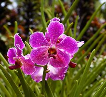 Purple flowers inside the National Orchid Garden in Singapore by ashishagarwal74