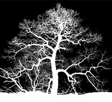 Skeleton Tree by Jean Gregory  Evans