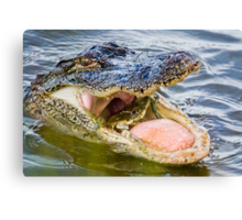 Gator Eating Crab Canvas Print