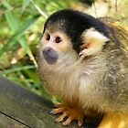 Squirrel Monkey by Mdgraphix