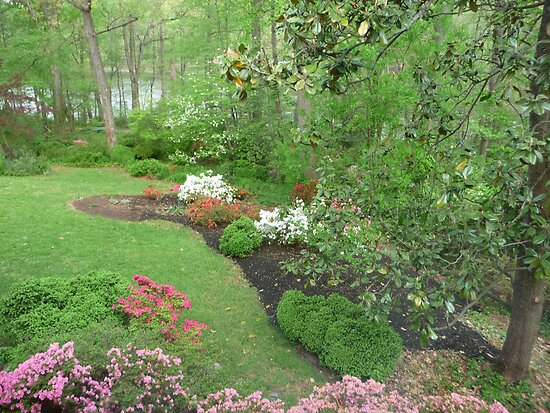 April garden in Greenbelt by nealbarnett